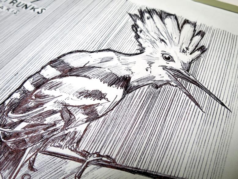 detail oiseau ttt